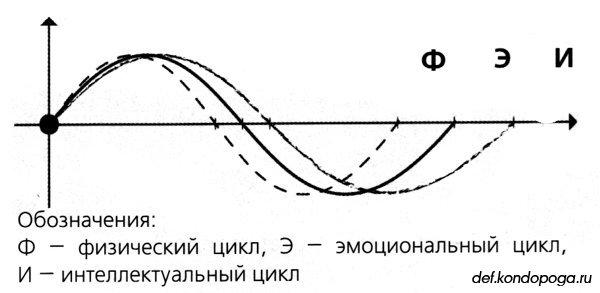 """Сергей Шпрах : """" БИОРИТМЫ"""
